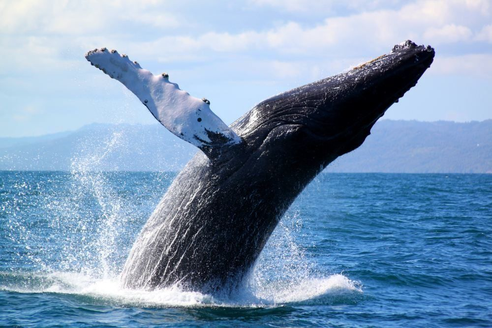 Whale Watching - Punta de Mita Vacation Rentals - Casa Joya Del Mar
